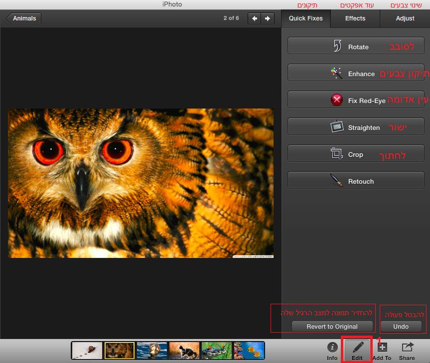 הוספת אפקטים שינוי צבע תמונה